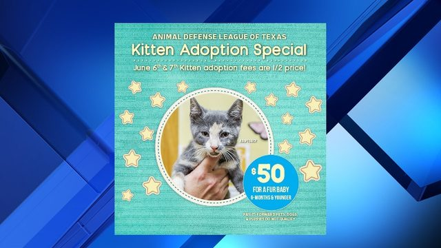 Want to adopt a kitten? Adoption fees are half-price Thursday, Friday