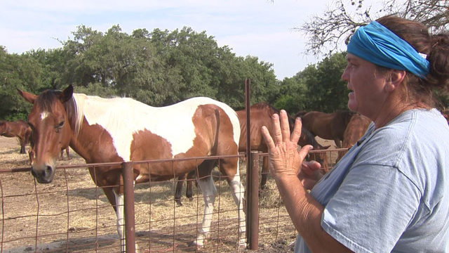 What's Up South Texas!: Woman diagnosed with MS saves hundreds of horses…