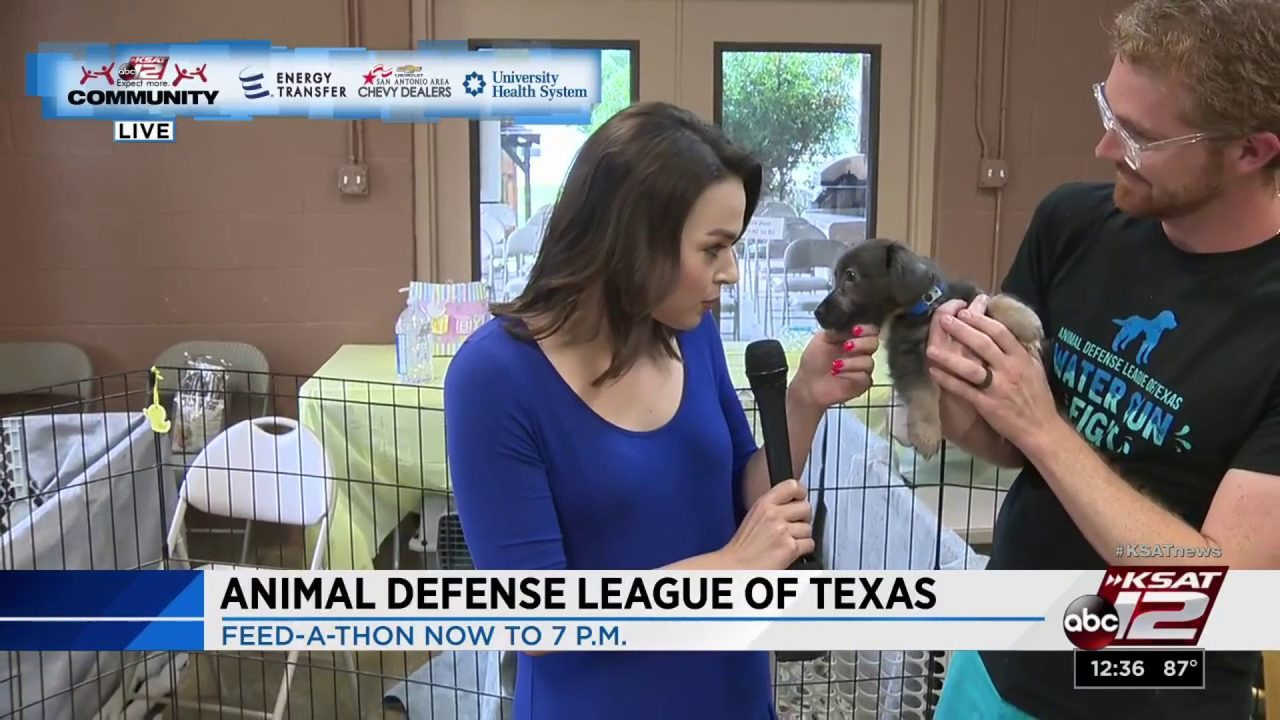 KSAT Community: Animal Defense League of Texas Puppy & Kitten
