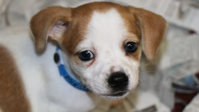 WATCH LIVE: Animal Defense League of Texas puppy cam