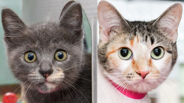 Adoption fees for cats, kittens to be waived this weekend