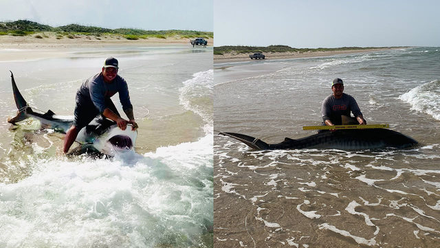 10-foot tiger shark caught at Padre Island National Seashore