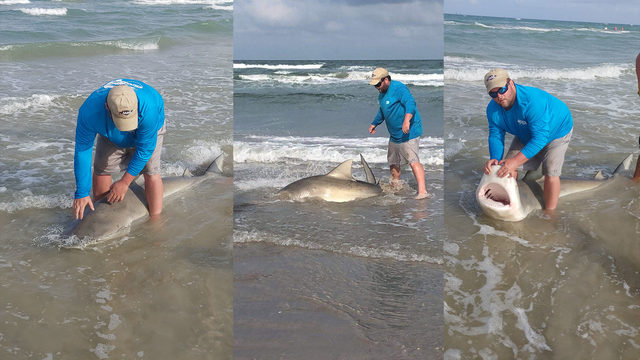 7-foot, 7-inch long shark caught off beach in Corpus Christi