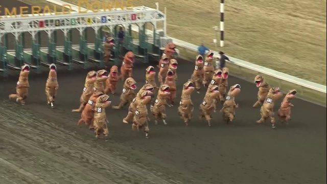 WATCH: Dinosaurs take the track in viral T. rex races
