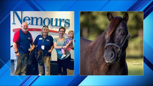 WJXT: Miniature therapy horse spreads joy at children's hospital