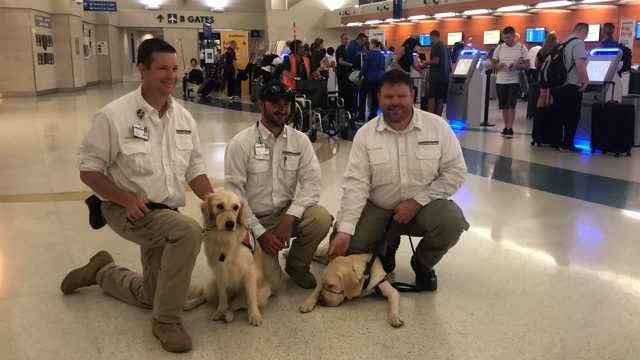 San Antonio dogs to provide comfort to first responders of El Paso shooting
