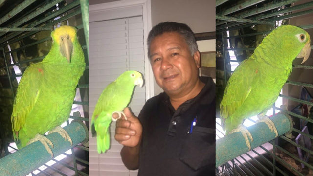VIDEO: This Texas parrot can grito better than you