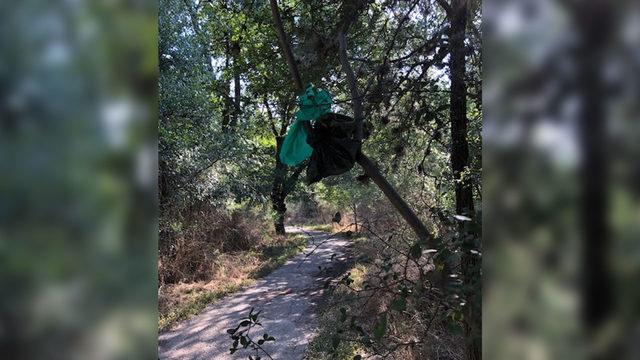'Dog poop fairy' doesn't exist, San Antonio park says