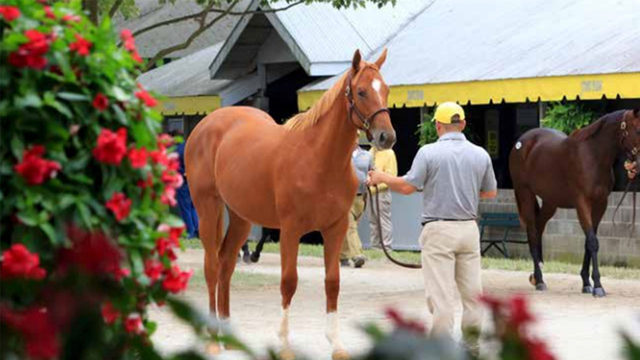 Thoroughbred racehorse prospects for sale in September at world's…