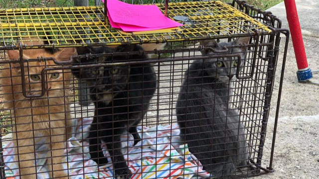 Family devastated after ACS seizes 29 animals from their home