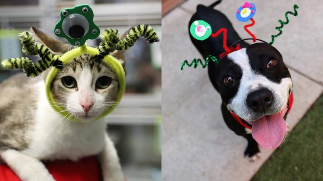 Adopt UFOs (cats, dogs) for $15 or less this weekend at Animal Care Services