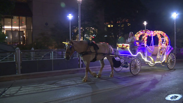 'While You Were Sleeping': Horse-drawn carriage crew stays on move into…