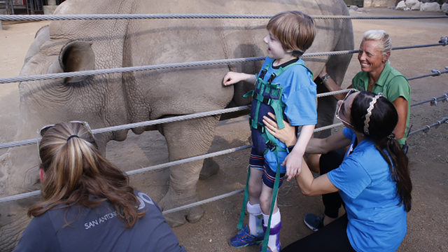 Children with physical disabilities experience San Antonio Zoo in new way