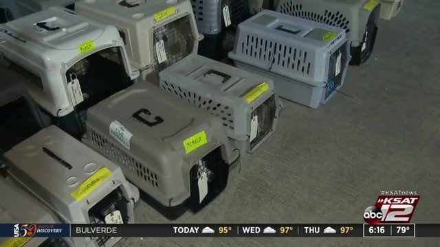 Two dozen local rescue dogs board plane heading to future homes