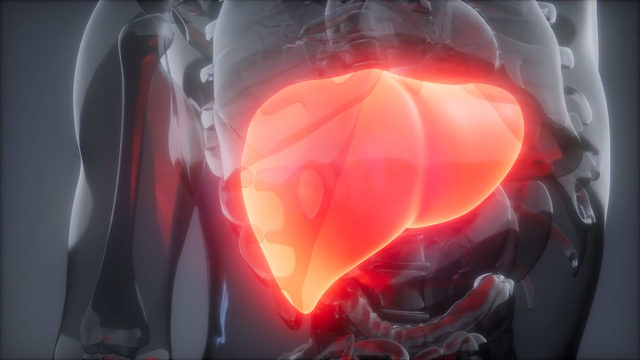 Hundreds call to get scanned for fatty liver disease after KSAT story airs