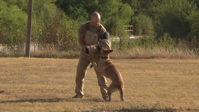 Behind the scenes of Military Working Dogs Program at JBSA-Lackland