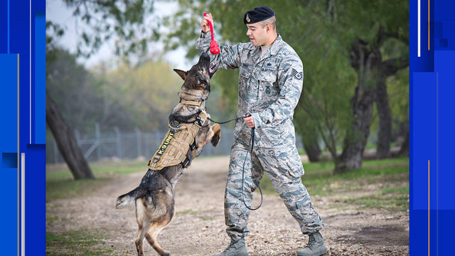 Retired military dogs in San Antonio up for adoption