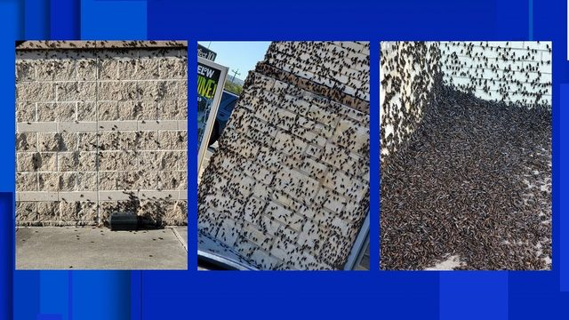 Pictures show an invasion of crickets around San Antonio