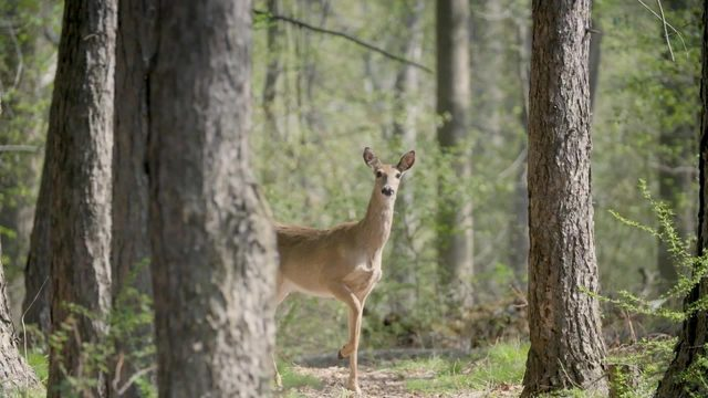 Fall driving: Avoid hitting a deer